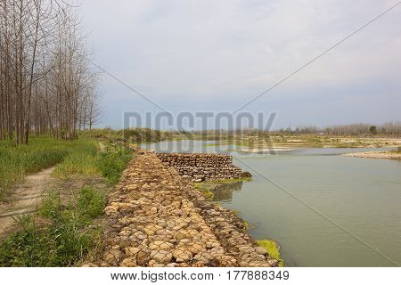 a punjabi river with stone bank wheat crops and poplar trees under a blue cloudy sky