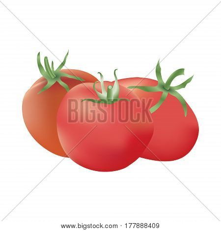 Group of three realistic tomatoes isolated on a white background. Harvest festival card. Autumn gifts. Vector illustration.
