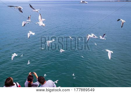Family of three people watching the seagulls flying over the sea. People feed seagulls. She photographed the gulls.
