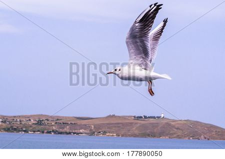 Big white seagull flying over the sea rapidly. A powerful bird in flight as a symbol of freedom. Also the bird can characterize the diversity of nature and the need to protect the environment.