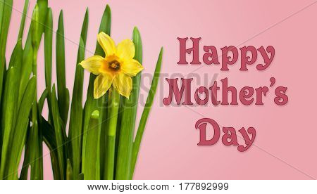 Happy Mother's Day pink background image with yellow daffodils
