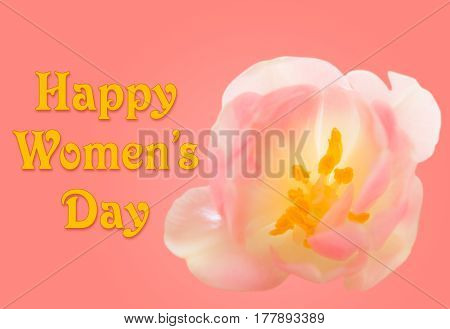 Happy Women's Day or International Womens Day celebrated on March 8th. Pink background image with tulip blossom
