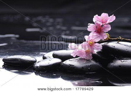 Still life with Pink cherry blossom
