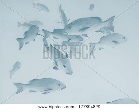 School of saltwater fish in the ocean at the Great Barrier Reef Australia
