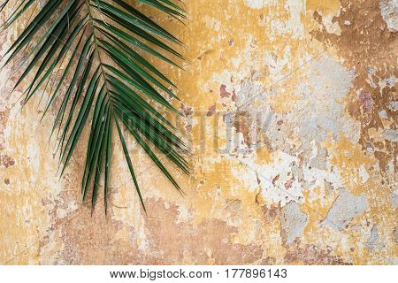 Old cracked antique vintage historic traditional wall and palm tree branch as tropic exotic summer tourist travel orange and yellow background