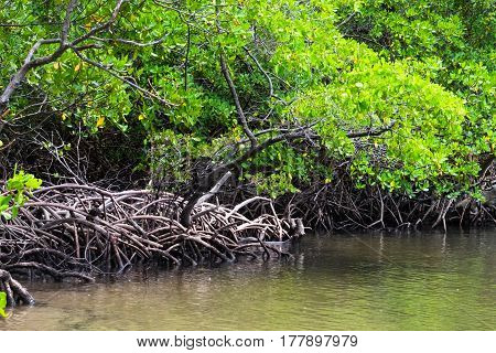 Mangrove In Praia Dos Carneiros, Pernambuco, Brazil