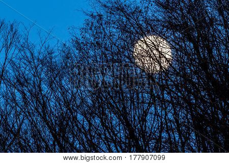 Full Yellow Moon With Medium Dark Blue Sky Behind Some Trees
