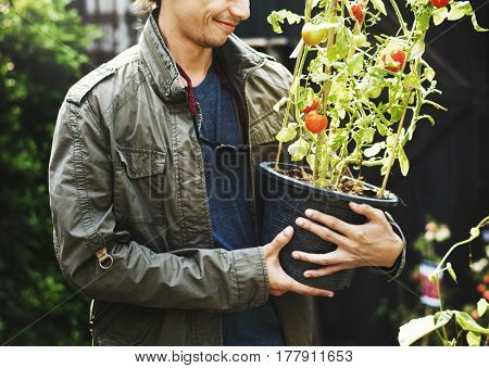 Adult Man Holding Tomatoes Tree in a Pot