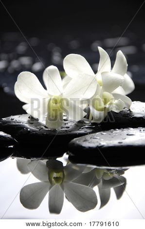therapy stones with white orchid reflection