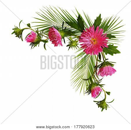 Decorative corner with pink aster flowers and pulm branches isolated on white background. Flat lay top view.