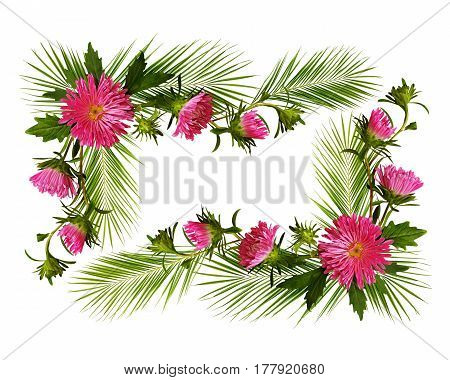 Decorative frame with pink aster flowers and pulm branches isolated on white background. Flat lay top view.