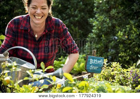 Woman planting vegetable in greenhouse