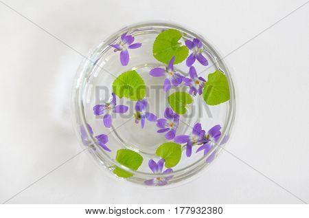 Sweet violet, viola odorata in vase