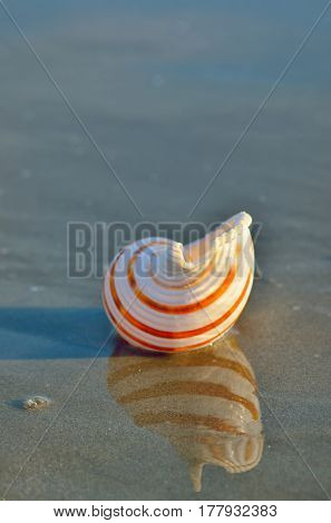 Sea shell on the sandy beach and reflexion