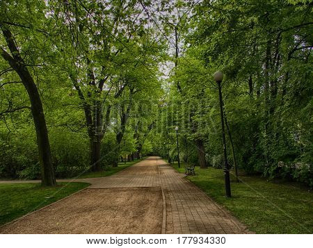 empty park alley in the tall green trees spring