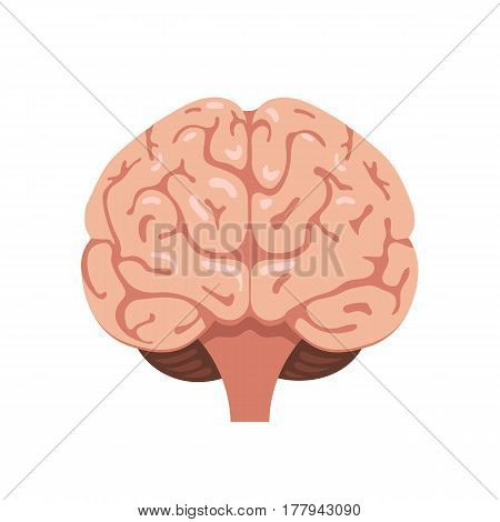 Human brain front view icon. Hnternal organs symbol. Vector illustration in cartoon style isolated on white background