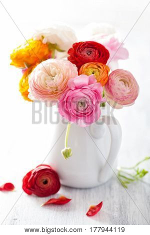 beautiful ranunculus flowers in vase over white