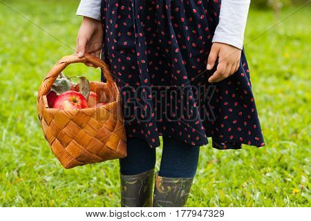 Six-Year Girl In Sundress With Picture Hold Wicker Basket With Ripe Apples On Background Of Green Grass In Garden.