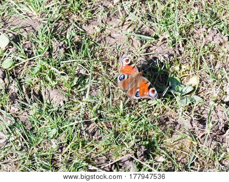 A red butterfly resting on the ground and in the sun.