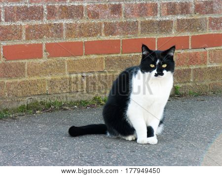 A cat pulling a strange stare on the street