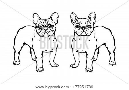 Set Of Hand Drawn Vector French Bulldogs