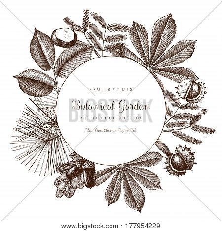 Vector design with hand drawn branch leaves fruits sketch. Retro template on chalkboard. Garden trees illustration