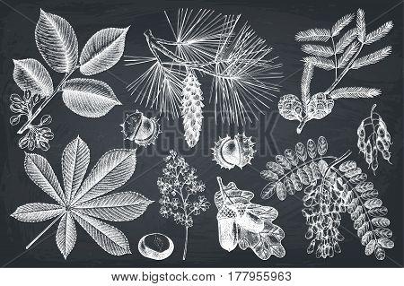 Vintage set of trees branches sketch. Botanical garden elements on chalkboard