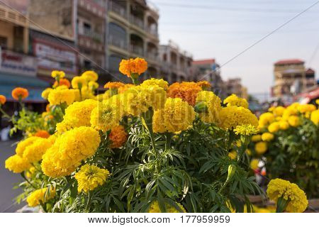 Yellow and orange Carnation flowers for sale at a flower market stall.