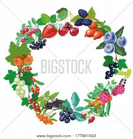 Christmas frame. Twigs and berries. Branch of mistletoe. Isolated vector object on white background.