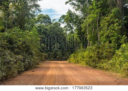 A Red Sand Dirt Road Cut Through A Forest.
