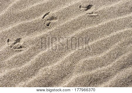 Fresh Beach Sand Background With Bird Tracks In Upper Left, Space For Text