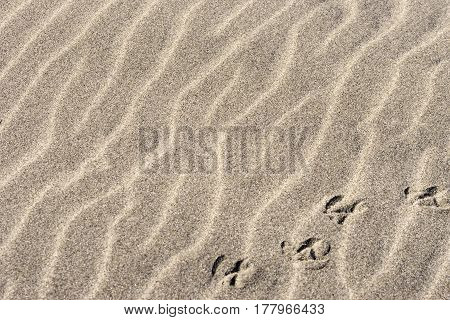 Natural Lines In Sand Background With Bird Tracks Across Bottom Right Corner