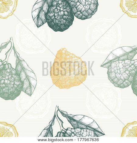 Vintage citrus fruit background in pastel colors. Vector illustration