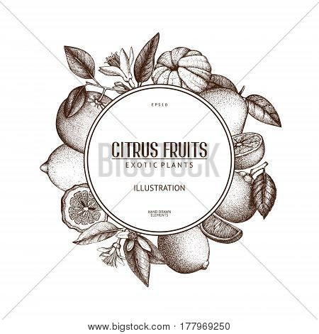 Vintage template. Vector illustration of highly detailed citrus fruits sketch in pastel colors.