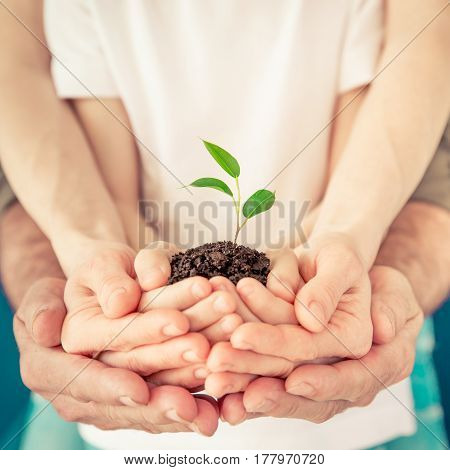 Family Holding Young Sprout In Hands