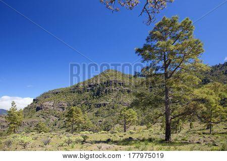 West Gran Canaria In February
