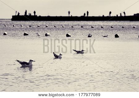 Seagulls on water. Seascape with birds and pier. Silhouettes of people by sea. Toned black and white photo