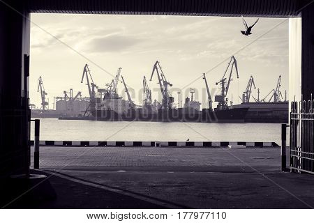 Seascape. Flying dove in unnel overlooking seaport. Loading cranes in early morning. Toned black and white photo
