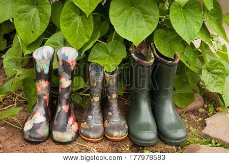 Garden Rainy Rubber Shoes. Rubber Boots (Male Children Female) On Earth Near Green Leaves Plant In Garden.
