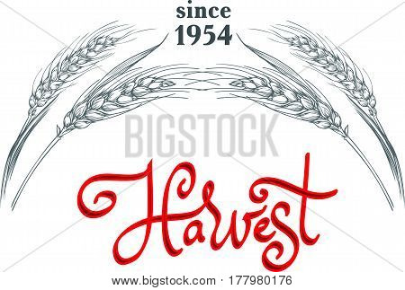 Sign or logo template with few ripe wheat ears and lettering Harvest. Vector illustration.