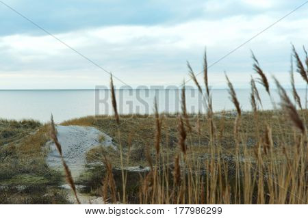 beach sea sea coast with its sandy dune and yellow grass is the Baltic sea