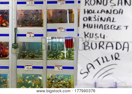 Fish In Tanks For Sale In A Pet Store At Arasta Bazaar In Edirne, Turkey.