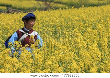 Shigu, China - March 17, 2017: Naxi Woman Dressed With Traditional Minority Attire In A Rapeseed Flo