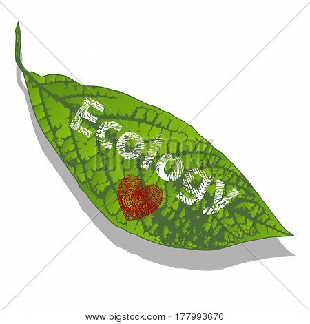 Illustration leaf plants with a heart as a symbol of ecology.