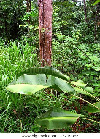 Kuranda Rainforest - Queensland, Australia