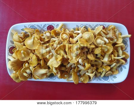 A plate of chanterells on the red table.