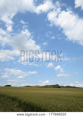 A field of wheat under a clear blue sky.