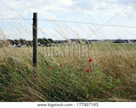 A green field with a fence and some red flowers.