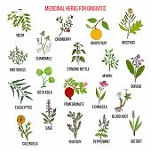 Best herbal remedies for gingivitis. Hand drawn vector set of medicinal plants poster