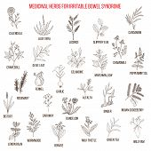 Best herbs for irritable bowel syndrome IBS . Hand drawn set of medicinal herbs poster